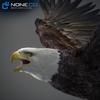 09 00 54 55 eagle bald 03 4