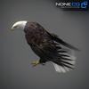 09 00 54 686 eagle bald 10 4