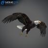 09 00 54 922 eagle bald 11 4