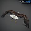 09 00 54 950 eagle bald 12 4