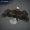 09 00 55 244 eagle bald 13 4
