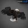 09 00 55 245 eagle bald 04 4