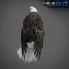 09 00 55 365 eagle bald 07 4