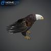 09 00 55 366 eagle bald 14 4
