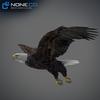09 00 55 538 eagle bald 16 4