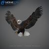 09 00 55 721 eagle bald 17 standard 4