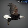 09 00 55 861 eagle bald 15 4