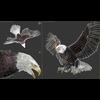 09 00 56 340 eagle bald 19 3dsmax wire 4
