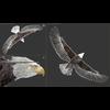 09 00 56 377 eagle bald 18 3dsmax wire 4