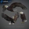 09 00 56 81 eagle bald 21 maya 4