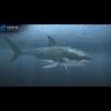 09 03 50 26 shark nonecg 1080 182 4