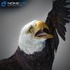 09 12 45 689 001 eagles 4