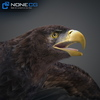 09 12 46 44 002 eagles 4