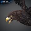 09 12 46 46 004 eagles 4
