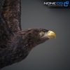 09 12 46 636 008 eagles 4