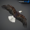 09 12 46 665 009 eagles 4