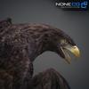 09 12 47 95 014 eagles 4
