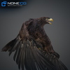 09 12 48 175 026 eagles 4