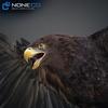 09 12 48 17 022 eagles 4