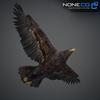 09 12 49 165 032 eagles 4