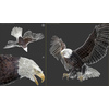 09 12 49 695 037 eagles 4