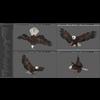 09 12 50 314 043 eagles 4