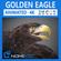 Animated Golden Eagle 3D Model