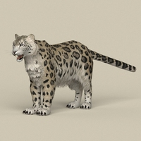 Game Ready Snow Leopard 3D Model