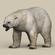 Game Ready Polar Bear 3D Model