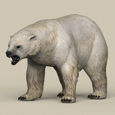 Game Ready Polar Bear 3D Model