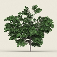 Game Ready Forest Tree 01 3D Model