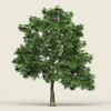 17 24 32 153 game ready forest tree 03 02 4