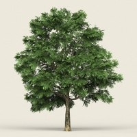 Game Ready Forest Tree 03 3D Model