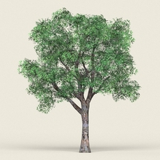 Game Ready Forest Tree 04 3D Model