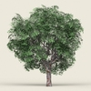 17 42 43 384 game ready forest tree 05 01 4