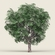 Game Ready Forest Tree 05 3D Model