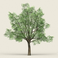 Game Ready Forest Tree 06 3D Model