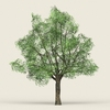 17 50 24 441 game ready forest tree 06 02 4