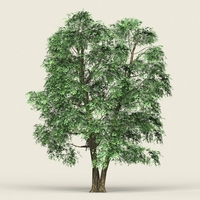 Game Ready Forest Tree 07 3D Model