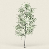 Game Ready Forest Tree 08 3D Model
