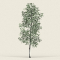 Game Ready Forest Tree 09 3D Model