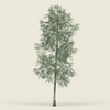18 16 26 111 game ready forest tree 09 01 4