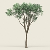 18 24 58 366 game ready forest tree 10 02 4