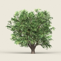 Game Ready Forest Tree 11 3D Model