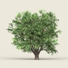 18 28 02 230 game ready forest tree 11 01 4
