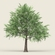 Game Ready Forest Tree 12 3D Model