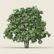 Game Ready Forest Tree 13 3D Model