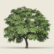 Game Ready Forest Tree 14 3D Model