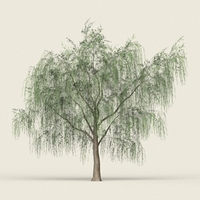 Game Ready Forest Tree 15 3D Model