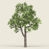 Game Ready Forest Tree 16 3D Model